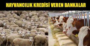 hayvancilik-kredisi-veren-bankalar